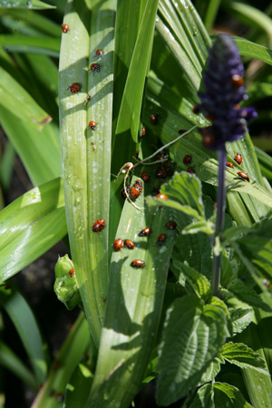 100 Third-Grade Students Releasing Ladybugs