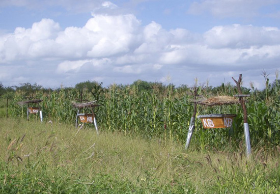 Strategically Placed Beehives