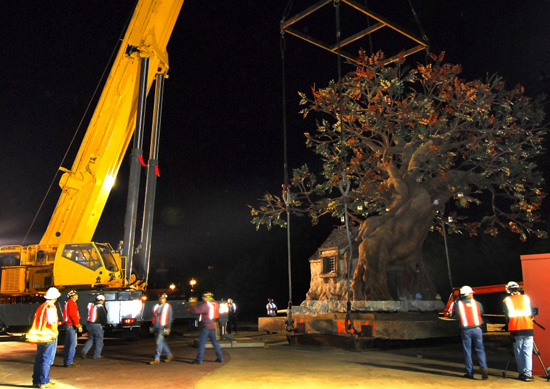 Winnie the Pooh Tree Relocated