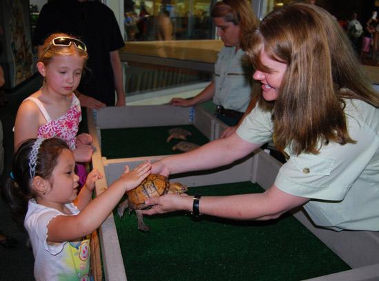 Turtle Meet and Greet at Disney's Animal Kingdom
