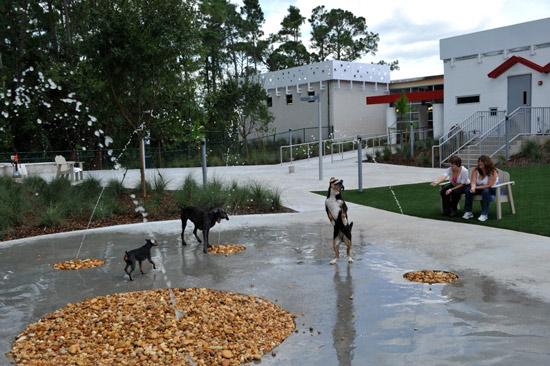 Luxury Pet Resort Doggy Water Fountain