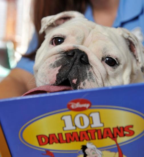 Luxury Pet Resort Doggy Storytime