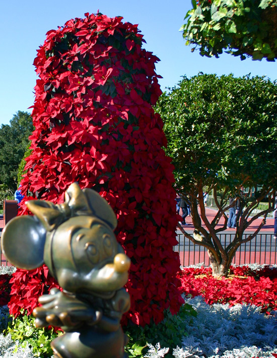 Poinsettias at Walt Disney World
