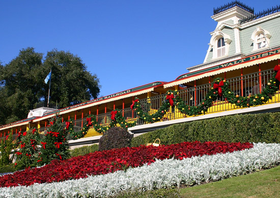 Poinsettias at Walt Disney World