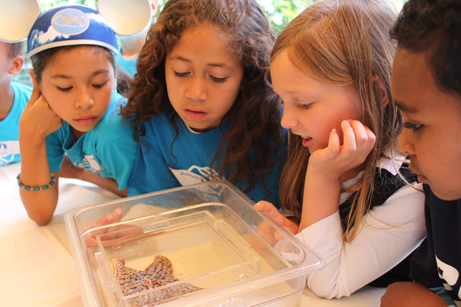 Boys & Girls Clubs Celebrate Earth Month