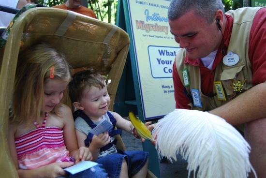 Celebrate International Migratory Bird Day at Disney's Animal Kingdom