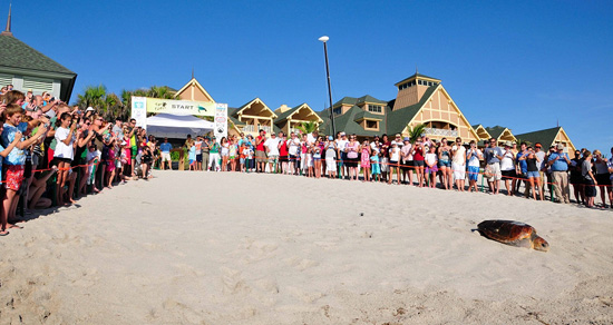 Guests at Disney's Vero Beach Resort Watch Loggerhead Sea Turtles Return to Sea