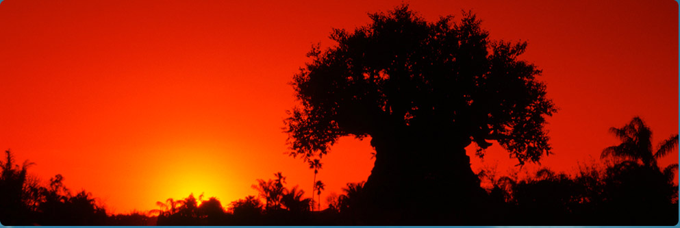 Sunset Over the Tree of Life at Disney's Animal Kingdom
