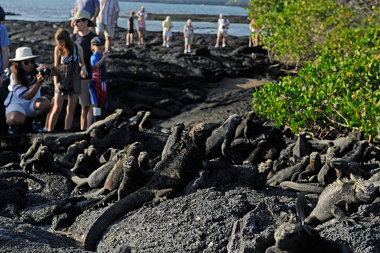 Come Face-to-Face with Marine Iguanas as You Explore the Galapagos Islands with Adventures by Disney