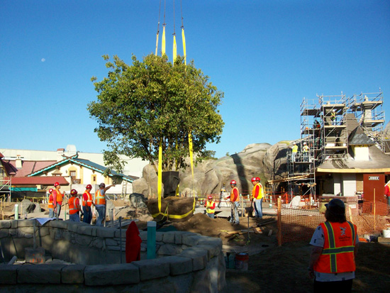 The First Tree is Planted in New Fantasyland at Magic Kingdom Park