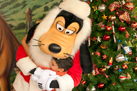 Goofy Spreading Holiday Cheer at Walt Disney World Resort