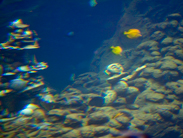 Menehune Spotted Underwater at Aulani, a Disney Resort & Spa