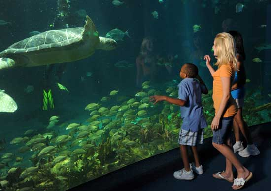 Get Up Close and Personal with Turtles at The Seas with Nemo &#038; Friends