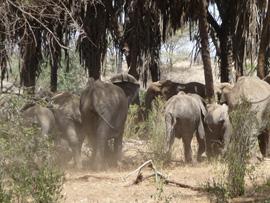 """""""Elephants"""