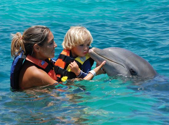 """Dolphin"
