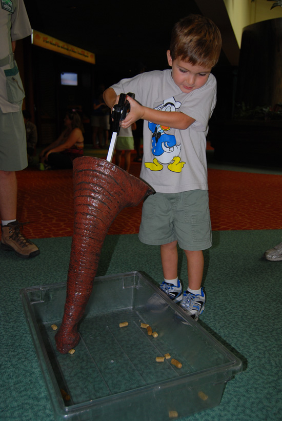 On September 26, Elephant Awareness Day, Guests Can Test Their Skills at Eating Like an Elephant Using a Replica of an Elephant Trunk
