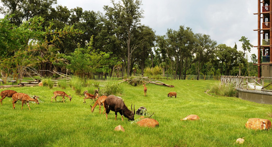 Wildlife Wednesdays: Animal Care Team Creates Hog Heaven at Disney's Animal Kingdom Lodge