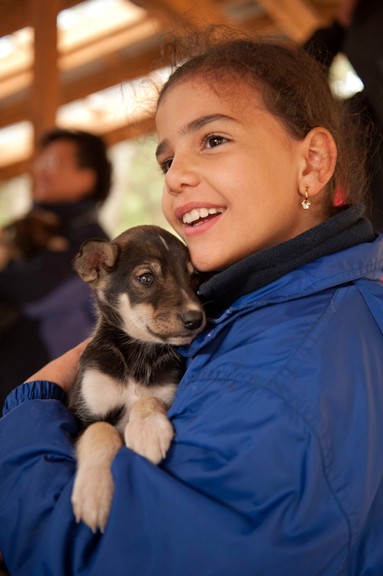 Meet the Crew of Alaska Heli Mush and Sled Dog Puppies on a Cruise to Alaska with Disney Cruise Line