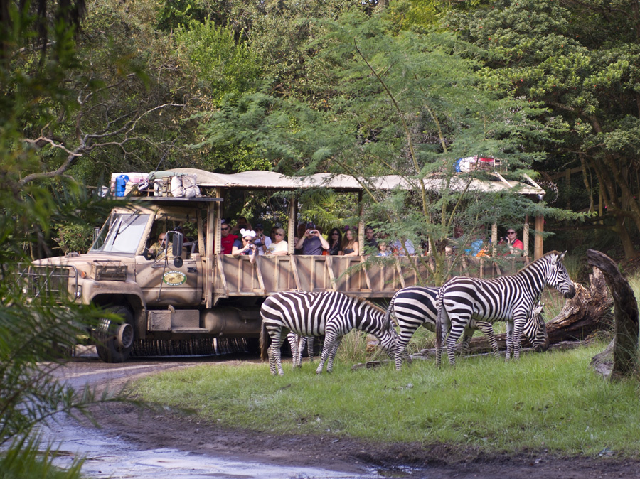 Guests Are Seeing Stripes At Disney S Animal Kingdom