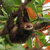 Exploring Costa Rica with Adventures by Disney &#8211; Sloth