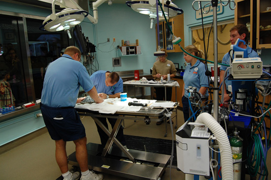 Veterinarians Examine Recovering Sea Turtles at the Animal Hospital at Disneys Animal Kingdom
