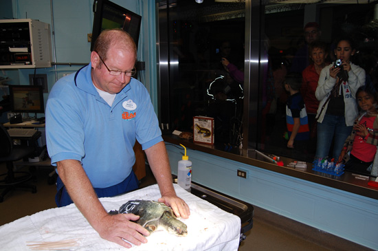Veterinarians Examine Recovering Sea Turtles at the Animal Hospital at Disney's Animal Kingdom