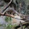 Wildlife Wednesdays: Training Equals Great Care for Otters at Disneys Animal Kingdom