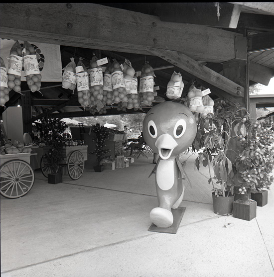 Rare Photos Found of Historic Orange Bird at Downtown Disney