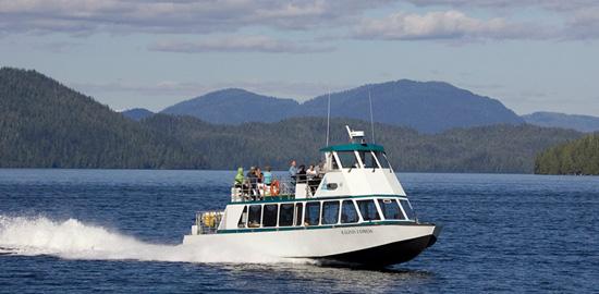 Explore Alaska's Wildlife with Disney Cruise Line