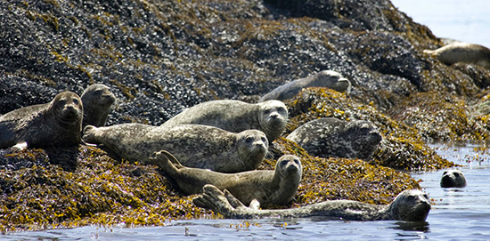 Discover Alaskas Annette Island with Disney Cruise Line