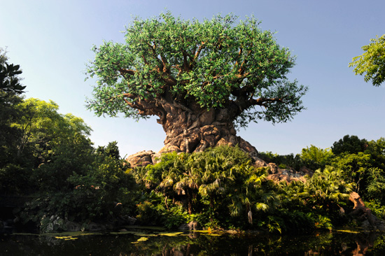 Time-Lapse Video: Watch the Tree of Life Grow at Disney's Animal Kingdom