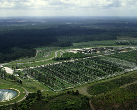 The Walt Disney World Resort Tree Farm in February 1981