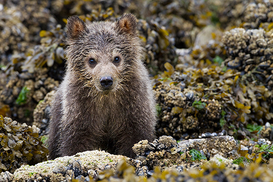 Wildlife Wednesdays: Disneynature 'Bears'