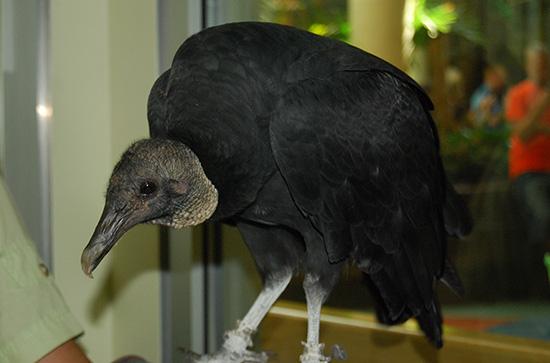"""Vultures"