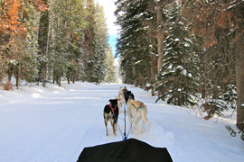 Iditarod Dog Sledding in Wyoming