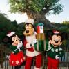 Enjoy the Holiday Season at Walt Disney World Resort