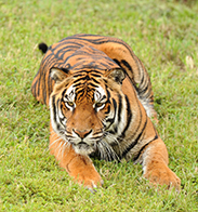 Wildlife Wednesdays: Lions, Tigers, Bears and More Celebrated at 2014 Families and Nature Events at the Walt Disney World Resort