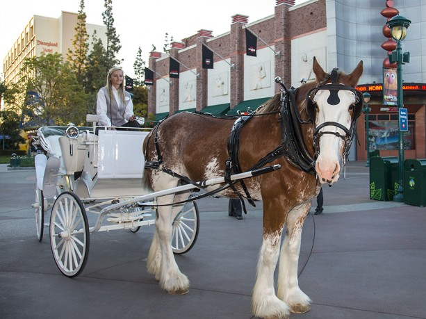 Carriage Rides  for Valentine's Day at Downtown Disney