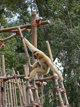 "Wildlife Wednesdays: Animal Sweethearts ""Hanging Out"" in Expanded Play Area at Disney's Animal Kingdom"