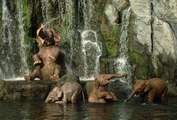 Jungle-Cruise-Elephants