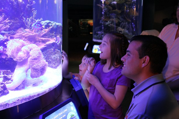 Wildlife Wednesdays: The Seas with Nemo & Friends Earns Praise for Conservation Efforts, Animal Care from Accrediting Association