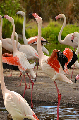 Wildlife Wednesdays: Birds of All Kinds of Feather Flock Together at Disney's Animal Kingdom