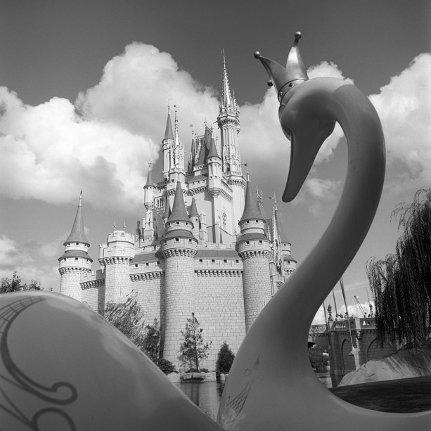 Caption This: A Swan's Song at Magic Kingdom Park