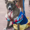 A Disney Side Dog's Day at Magic Kingdom Park Event