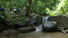Rainforest Hike Port Adventure with Disney Cruise Line