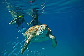 Turtle Shipwreck & Snorkel Adventure, in Barbados with Disney Cruise Line