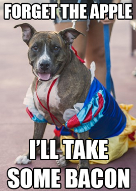 Favorite Memes from Disney Side Dog's Day at Magic Kingdom