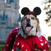 Watch America's Cutest Pet – Howl-o-Ween Special Airing October 18