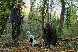 Set Off on a Once-in-a-Lifetime Truffle Hunting Experience with an Expert Truffle-Hunter and His Truffle-Hunting Hound