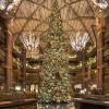 Christmas Trees at Disney's Animal Kingdom Lodge